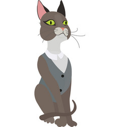 Gray cat in vest on a white background vector
