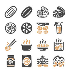 lotus root icon set vector image
