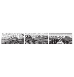 set vineyards fields and hills tuscany vector image