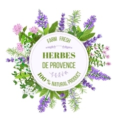 Herbes de Provence Thyme Savory Rosemary vector image