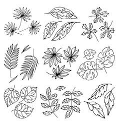 black leaves palm tree leaf summer nature vector image vector image