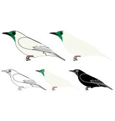 Araponga bird in profile view vector