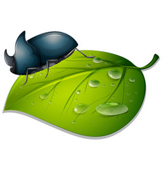 Beetle on green leaf on white background vector