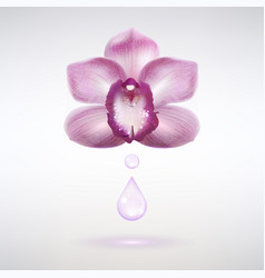 Fragrant orchid flower with a drop essential vector