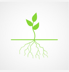 graphic young tree with root vector image