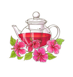 hibiscus tea vector image