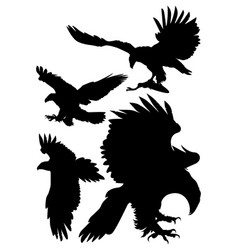 soaring eagles vector image