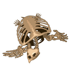 the skeleton of a prehistoric turtle isolated on vector image