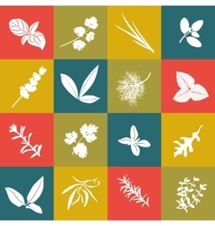 Herbs hand drawn big icon squared set vector image vector image
