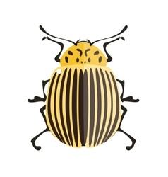 Potato bug vector image vector image