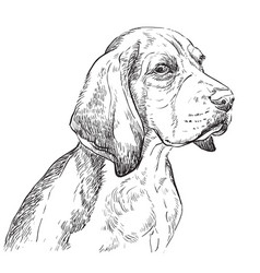Beagle hand drawing portrait vector