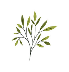 Branch with leaves on white background vector