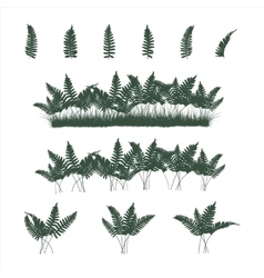 ferns set in flat colors vector image