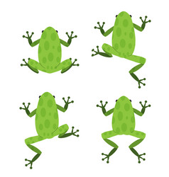 Set green frog in flat style with pattern vector