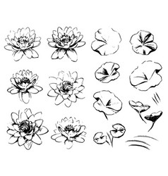 sketch water lilies isolated on white background vector image