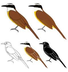 Te vi bird in profile view vector