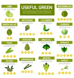 Vegetarian food infographic background vector image