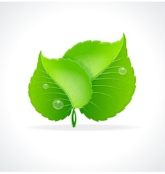 Glossy green detailed leaves vector image vector image