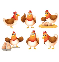 Chickens with eggs vector