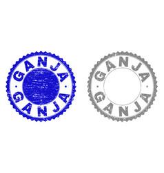 Grunge ganja textured stamp seals vector