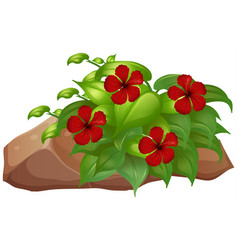 habicus flowers and rocks on white background vector image