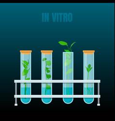 In vitro plant tissue culture vector