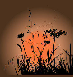 Plants silhouettes on sunset background vector
