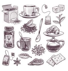 sketch tea hand drawn tea leaves mugs vector image