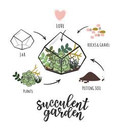Succulent garden infographic vector