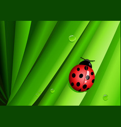 graphic of a lady bug on green leaves vector image