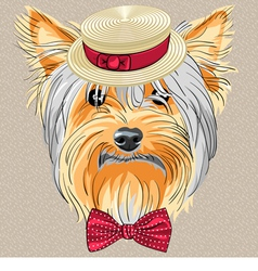 hipster dog Yorkshire Terrier vector image vector image