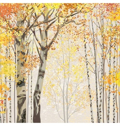 Birch grove in autumn time vector