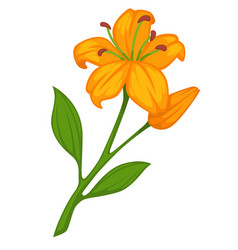 Flower lily blossom bud or bloom flat vector