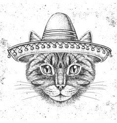 Hipster animal cat wearing a sombrero hat vector