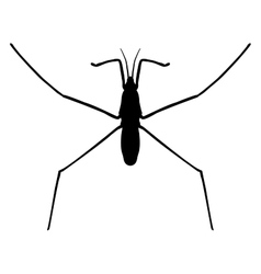 insect in magnifierwater strider Gerridae vector image