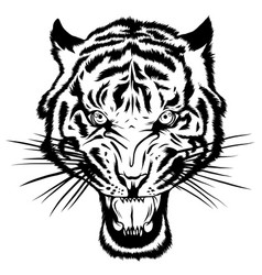 mascot image a tiger head with whiskers vector image