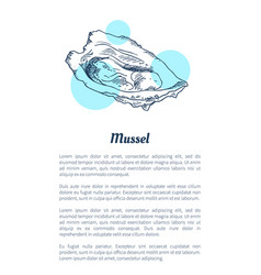 Mussel marine creature hand drawn poster with text vector