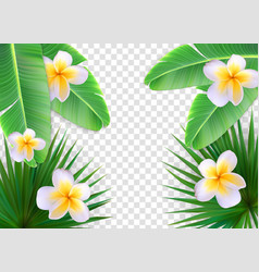 summer natural floral frame on transparent vector image