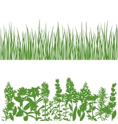Grass and plants detailed silhouettes on white vector image vector image