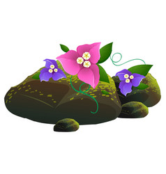 pink and purple flowers and rocks on white vector image