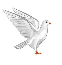 Dove white pigeon symbol peace vector