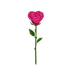 Heart shape rose isolated flower vector