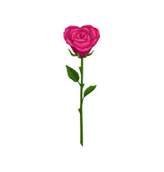 heart shape rose isolated flower vector image