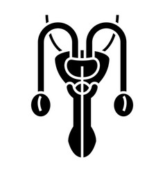 male sexual organs icon vector image