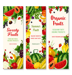 summer fruit and berry banner set for food design vector image vector image