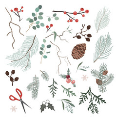 botanical christmas elements for making xmas vector image