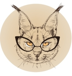 Hipster portrait of bobcat with glasses vector