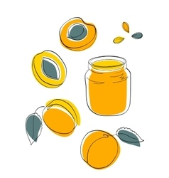 Apricot jam and fruits vector