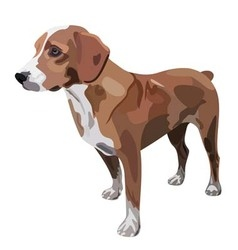 Hunting dog on white background vector