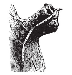 Stub of a limb of a tree vintage vector